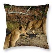 Lion Cubs Of Zimbabwe  Throw Pillow