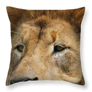 Lion Eyes Throw Pillow