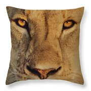Lion Face  Throw Pillow