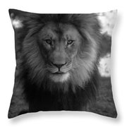 Lion Going For A Haircut Throw Pillow