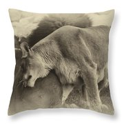Lion Hugs In Heirloom Finish Throw Pillow
