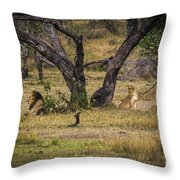 Lion In The Dog House Throw Pillow by Darcy Michaelchuk