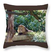Lion King At Washington Zoo Throw Pillow