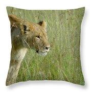 lion Masai Mara Kenya Throw Pillow