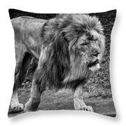 Lion On The Prowl Throw Pillow