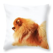 Lion On The Snow Throw Pillow