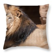 Lion Portrait Of The King Of Beasts Throw Pillow
