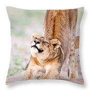 Lioness Panthera Leo Stretching Throw Pillow