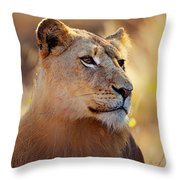 Lioness Portrait Lying In Grass Throw Pillow