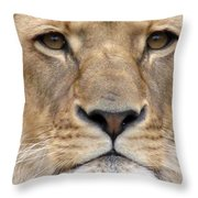 Lioness Portrait Throw Pillow