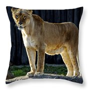 Lioness Throw Pillow by Frozen in Time Fine Art Photography