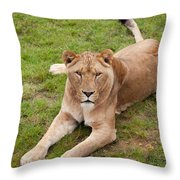 Lioness Sitting In Grass Throw Pillow
