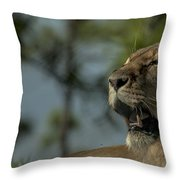 Lioness Voicing Opinion Throw Pillow