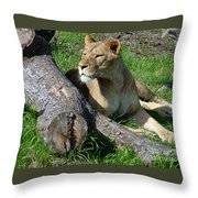 Lioness2 Throw Pillow