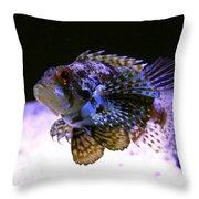 Lionfish Dendriochrius Barberi Throw Pillow by Karon Melillo DeVega