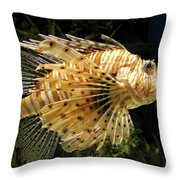 Lionfish Searching For Its Prey Throw Pillow