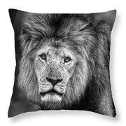 Lion's Eyes Throw Pillow