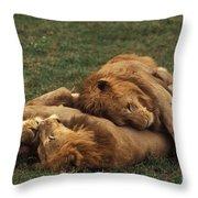 Lions Throw Pillow