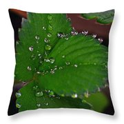 Liquid Pearls On Strawberry Leaves Throw Pillow