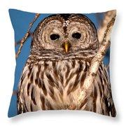 Lit Up Owl Throw Pillow