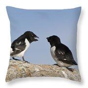 Little Auk Pair Spitsbergen Norway Throw Pillow
