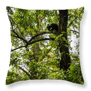 Little Bear Cub In Tree Cades Cove 2 Throw Pillow