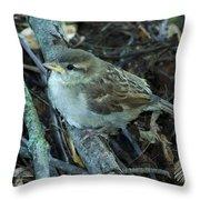Little Bird Waiting Throw Pillow