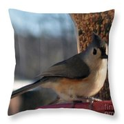 Little Gray Crested Titmouse Bird Ready For Lunch Throw Pillow