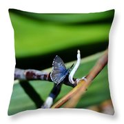 Little Blue Butterfly Throw Pillow