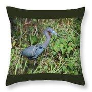 Little Blue Heron 2 Throw Pillow