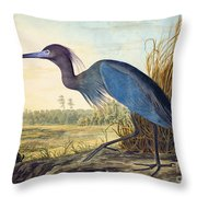 Little Blue Heron Throw Pillow by Celestial Images