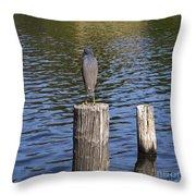 Little Blue Heron - Egretta Caerulea  Throw Pillow