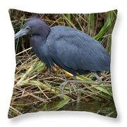 Little Blue Heron Hunting Throw Pillow