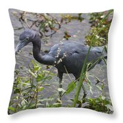 Little Blue Heron - Waiting For Prey Throw Pillow