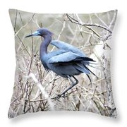 Little Blue In Rookery Louisiana Throw Pillow