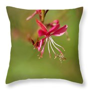 Little Bug On The Tip Of A Flower Throw Pillow