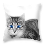 Little Cute Kitten. Space For Your Text Throw Pillow