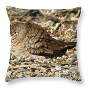 Little Dove Throw Pillow