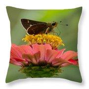 Little Glassywing Skipper Butterfly Throw Pillow