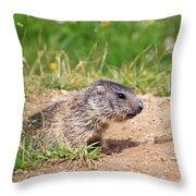 Little Marmot Throw Pillow