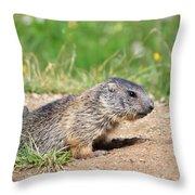 Little Marmots Throw Pillow