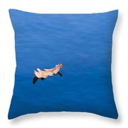 Little Navy - Independent Sailing - Feature 3 Throw Pillow