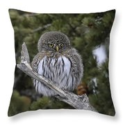 Little One - Northern Pygmy Owl Throw Pillow