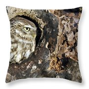 Little Owl 4 Throw Pillow