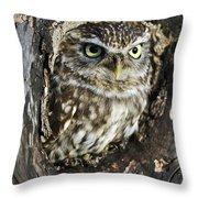 Little Owl 6 Throw Pillow
