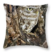 Little Owl In Hollow Tree Throw Pillow