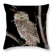 Little Owl Or Spotted Owlet Throw Pillow