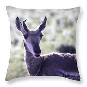 Little Pronghorn Throw Pillow