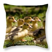 Yellow Muscovy Duck Ducklings Running Fast  Throw Pillow