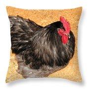 Live Chicken - 2011 Houston Livestock Show Throw Pillow